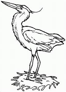 Free coloring pages of tropical birds