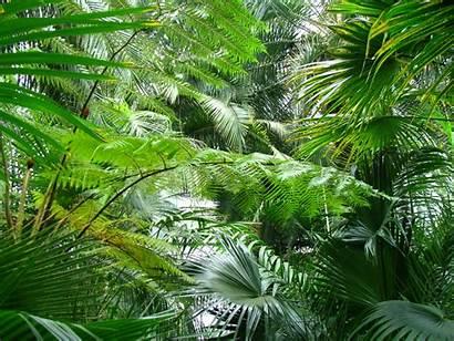 Tropical Plants Domain Publicdomainpictures