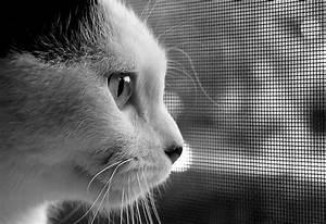 Fido Pet Shop : protect fido with pet screens jack 39 s glass ~ Markanthonyermac.com Haus und Dekorationen