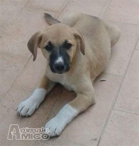 adozione cani roma adozione cani roma cagnolina taglia