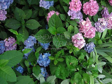 lavender soil ph 63610711i 6kp fundamental photographs the art of science