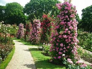 Comment Tailler Les Rosiers : les rosiers ~ Nature-et-papiers.com Idées de Décoration
