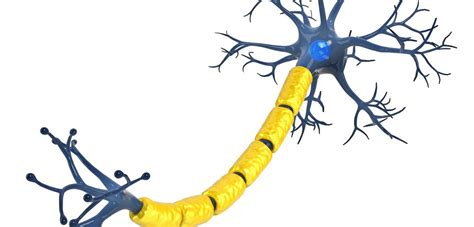als cell therapies  benefit  study  motor neuron