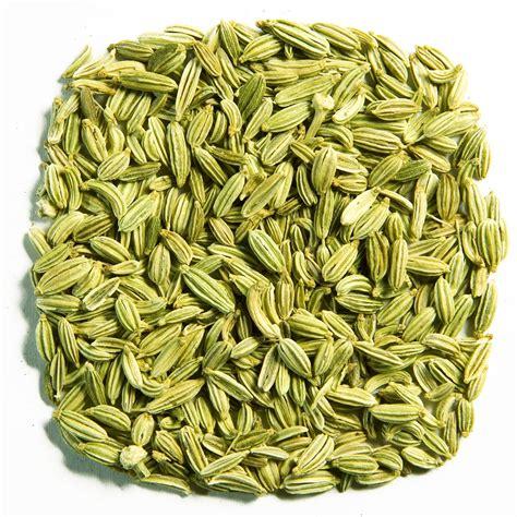 tanaman adas fennel 7 amazing home remedy ingredients for indigestion