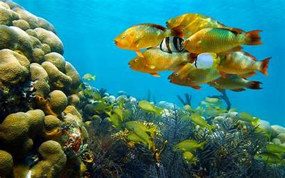 Underwater Fish Ultra Corals Wallpapers13