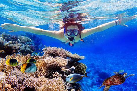 diving or snorkeling in menjangan island palm living