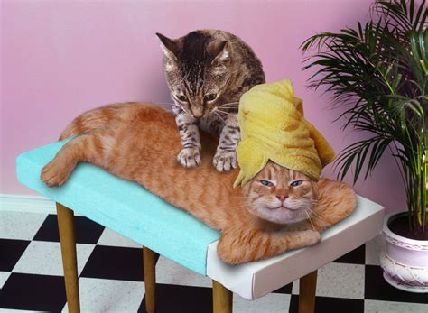 Massage Your Pets And They'll Love You More I Lol At This