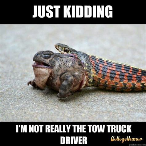Snake Memes - 7 best images about snake memes on pinterest mice microwaves and lol