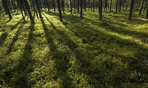 What U0026 39 S A Boreal Forest  And The Three Other Types Of