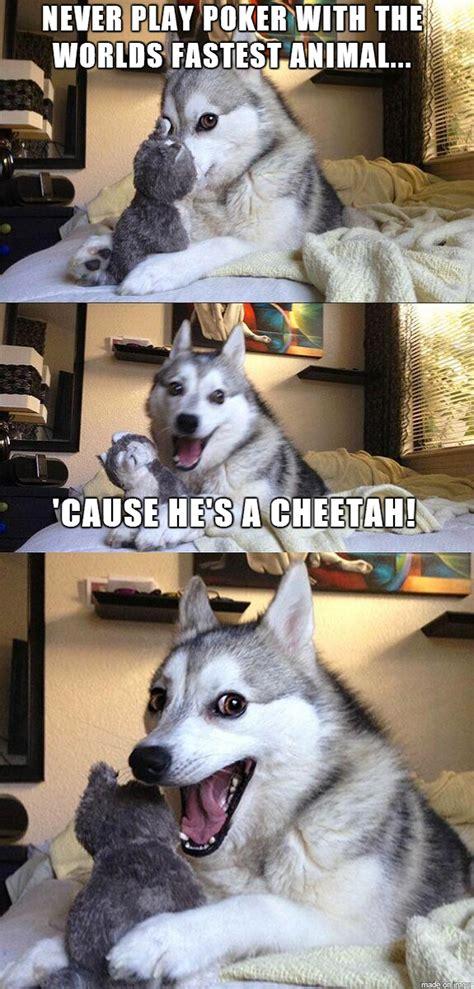 pun dog    jokes