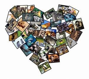 Fotos Als Collage : coole collages maken girlz4girlz ~ Markanthonyermac.com Haus und Dekorationen
