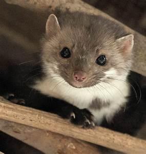 Mader Tier Auto : mardern gen gen zehn zentimeter m llheim badische zeitung ~ A.2002-acura-tl-radio.info Haus und Dekorationen