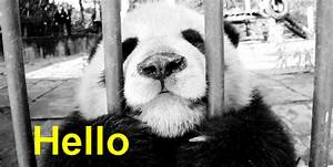 Panda Bear Hello GIF - Find & Share on GIPHY
