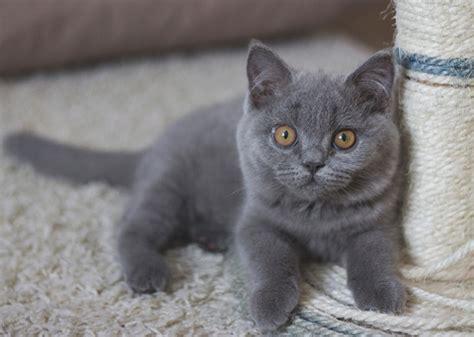 gray cat names girl cat names grey stripes