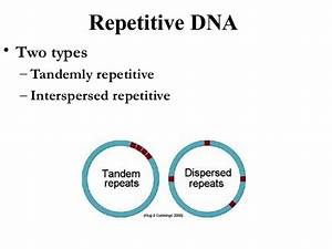 Genome organisation in eukaryotes...........!!!!!!!!!!!