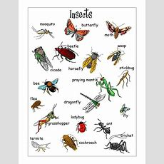 Insects Vocabulary In English  English Grammar  Limba Engleză, Gramatică Engleză și Limbă