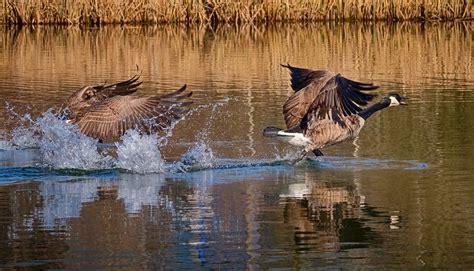 intro i say what watcha say? Auf der Flucht Foto & Bild | tiere, wildlife, wild lebende vögel Bilder auf fotocommunity