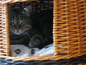 Mit Katze Umziehen : umzug ch umziehen mit katzen ~ Michelbontemps.com Haus und Dekorationen