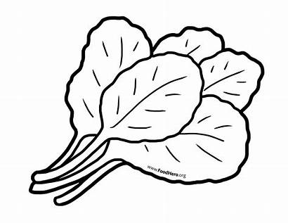 Clipart Greens Vegetables Outline Drawing Coloring Vegetable