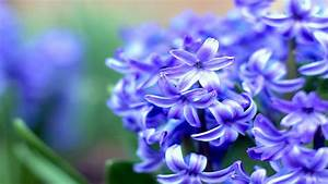 Top 10 Most Beautiful Flowers in the World - YouTube