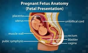 Fetus Images