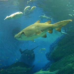 Power Restored To New York Aquarium After Damage From ...