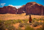 Desert Landscape and Horse