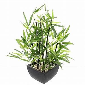 Bambus Als Zimmerpflanze : bambus im topf test gartenbau f r jederman ganz einfach september 2018 ~ Eleganceandgraceweddings.com Haus und Dekorationen