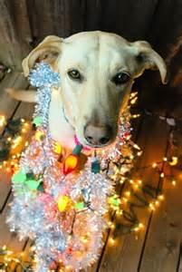 Cute Dog Christmas Lights