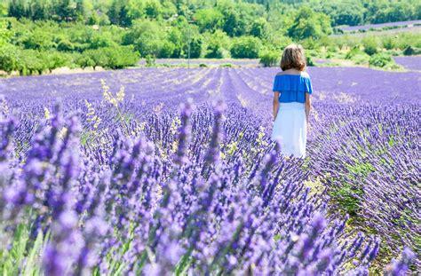 lavender-flower-fields-france - TripZilla