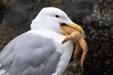 bird digestion how birds eat