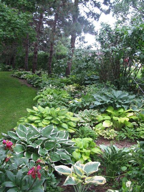 hosta landscaping ideas 25 best ideas about hosta gardens on pinterest hosta flower hosta varieties and full shade