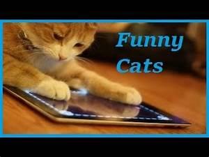 Funny Cat - Fun... Funny Cat Videos