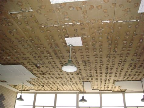 asbestos ceiling tile adhesive excessive moisture build