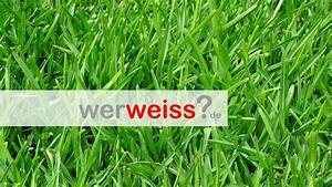 Rasen Düngen Wässern : wie entferne ich unkraut aus meinem rasen ~ Markanthonyermac.com Haus und Dekorationen