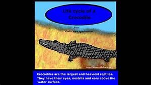 The Crocodile Life Cycle - Kidz Learn Applications U2122