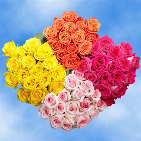 Globalrose Fresh Assorted Color - Valentine's Day Roses ...