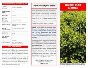 National Plant Network Hd7191 2 25 Gal  Dwarf Wax Myrtle