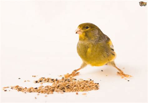 guide to bird seed pets4homes