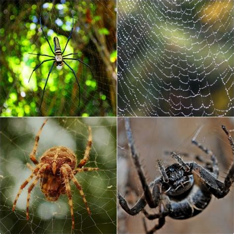 keep spiders out of house 12 ways to keep spiders out of your home 7624