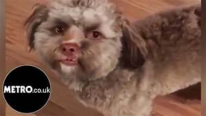 Yogi The Dog With A Human Face | Metro.co.uk - YouTube