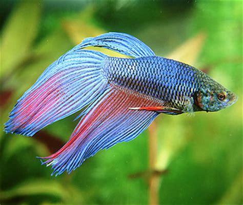 goldfish  boring    top tips  keeping