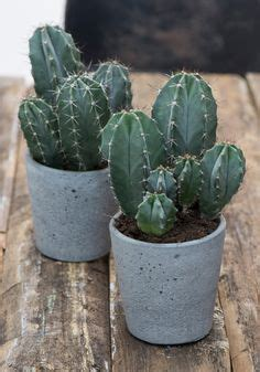blumentöpfe groß innen die 24 besten bilder vasen 220 bert 246 pfe vasen blumen und pflanzen