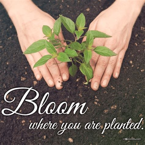 Includes the following formats in color: Bloom Where You're Planted - Inspirations
