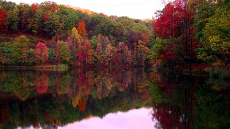 Colourful Autumn Wallpaper by Fall Tree Wallpapers Wallpaper Cave