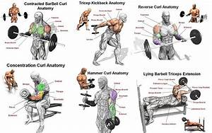 The Best Arm Workout For Mass And Strength  With Images
