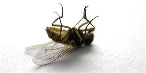 fliegenfalle selber machen anleitung fruchtfliegenfalle selber bauen fruchtfliegenfalle selber bauen fruchtfliegenfalle