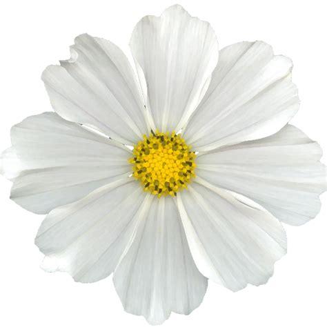 white flower pictures b cuz i can free white digi scrapbook flower