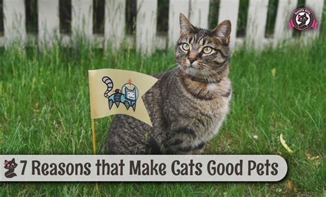pets cats why reasons cat updated june last