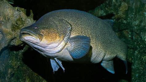 australian fish species tourism australia
